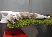 gato en el hotel | residencia felina de la Clínica Veterinaria La Cuesta, en La Laguna Santa Cruz de Tenerife