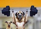 Nutrición en Clínica Veterinaria La Cuesta, perros deportistas